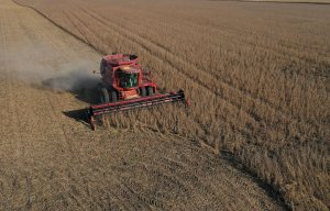 Aerial view of a combine harvesting soybeans