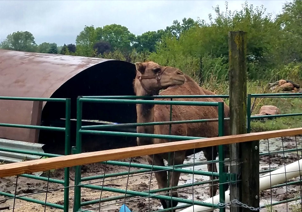 'Get some therapy,' angry wildlife exhibitor tells lawyer in Cricket Hollow case