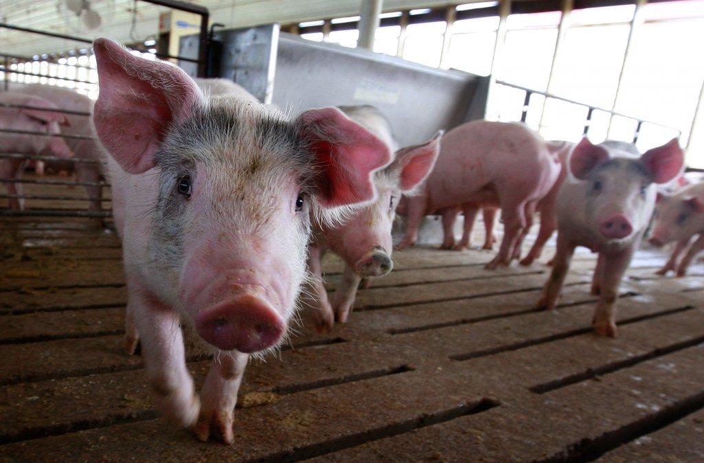 Iowa's 'ag gag' has stifled investigations, despite pending court challenges