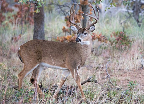 Lawmakers advance bill that would reduce fines for poaching deer