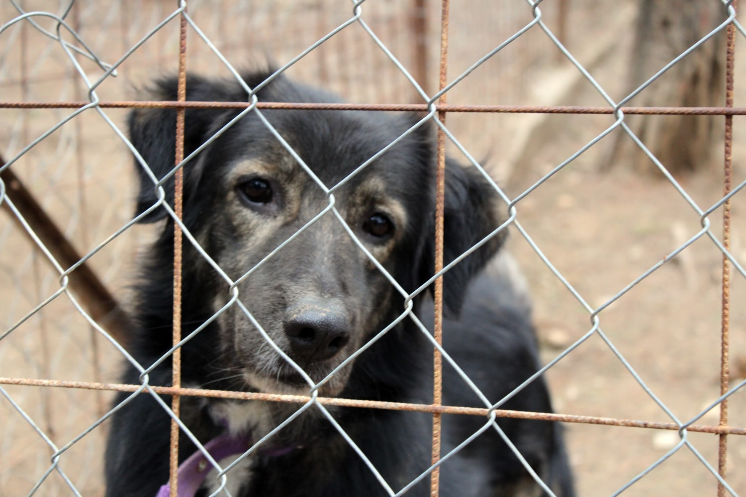 Eleven Iowa dog breeders among the Humane Society's annual 'Horrible Hundred' list