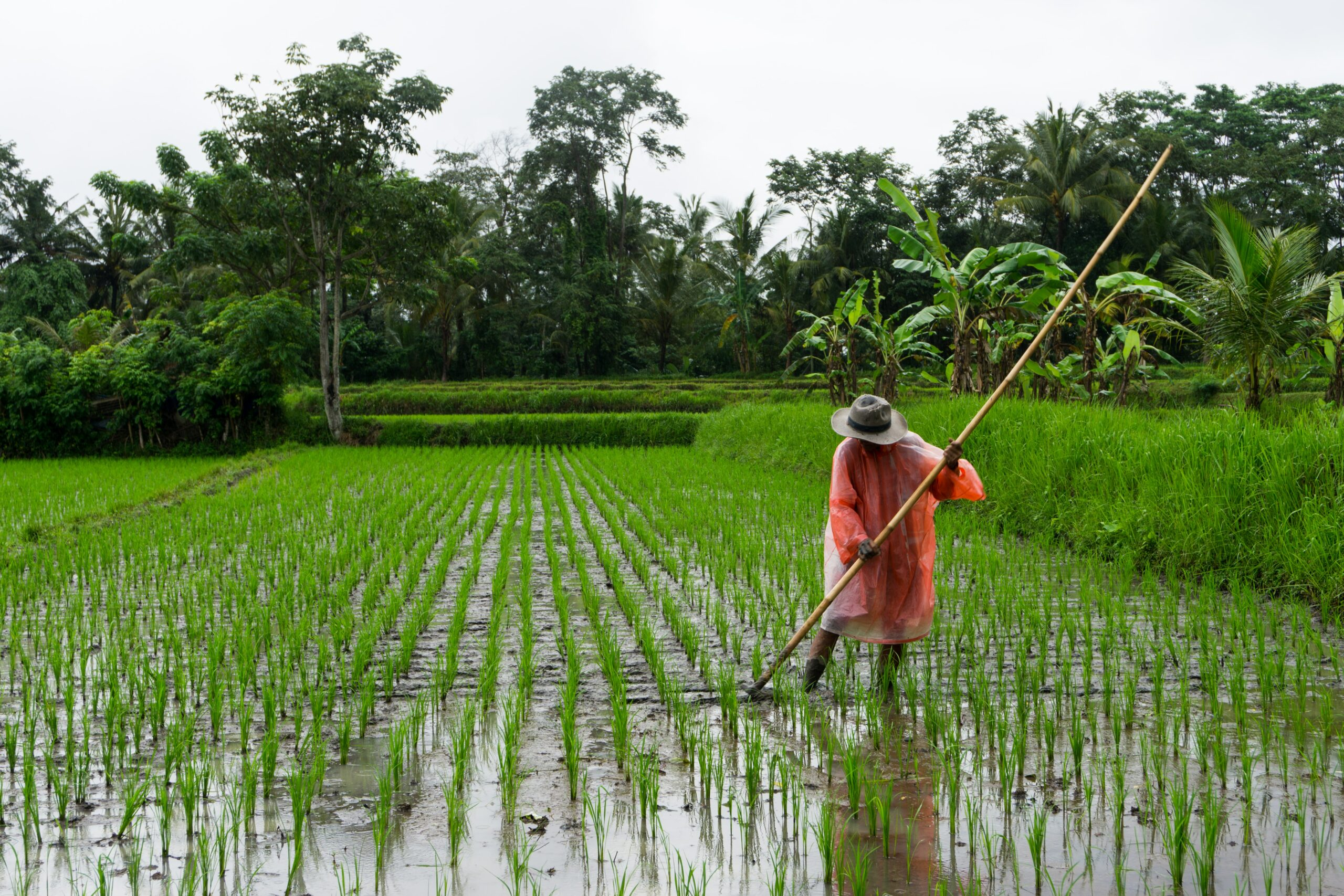 What American farmers could gain by rejoining the Asia-Pacific trade deal that Trump spurned