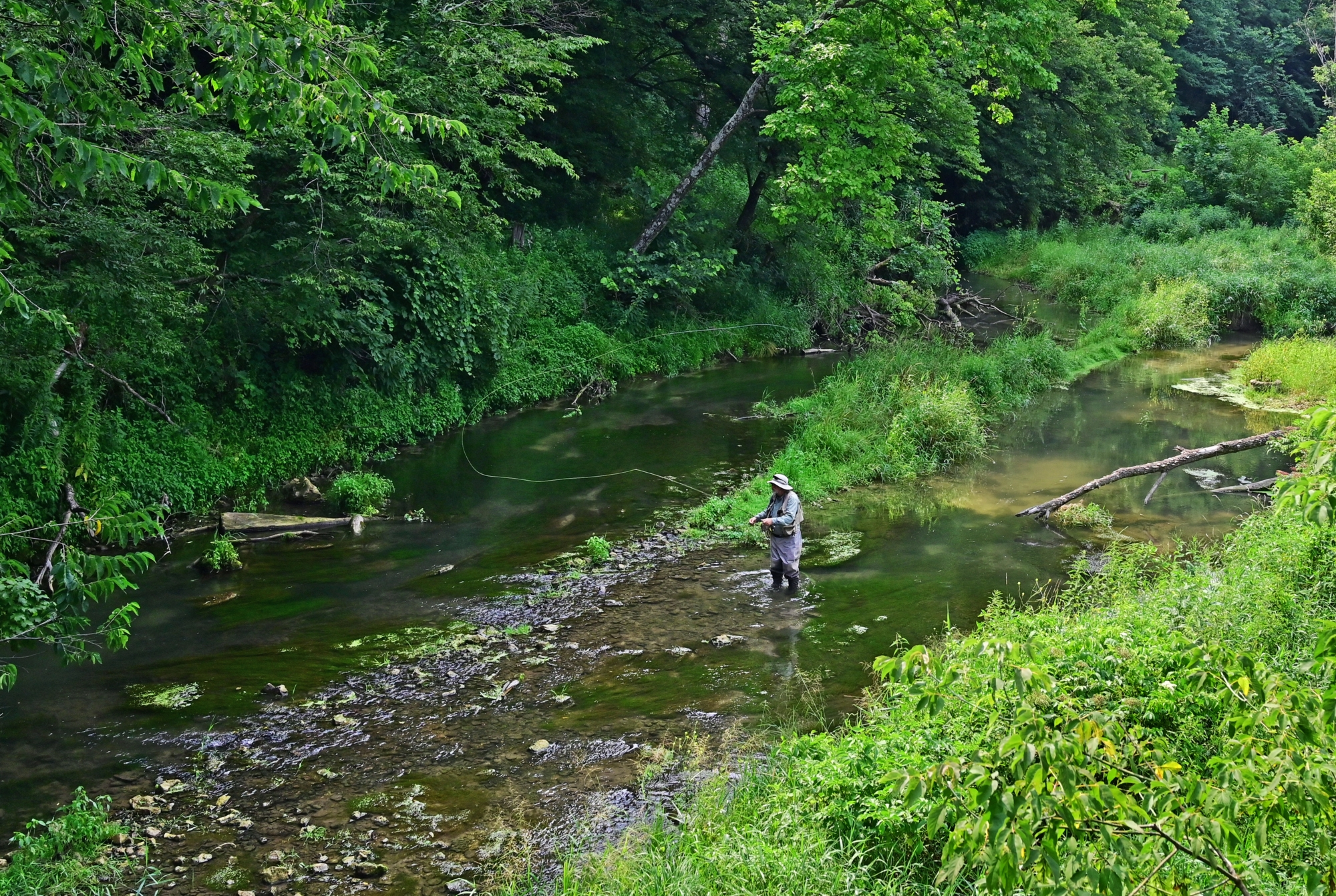 Heated battle over trout stream and planned cattle operation lands in court
