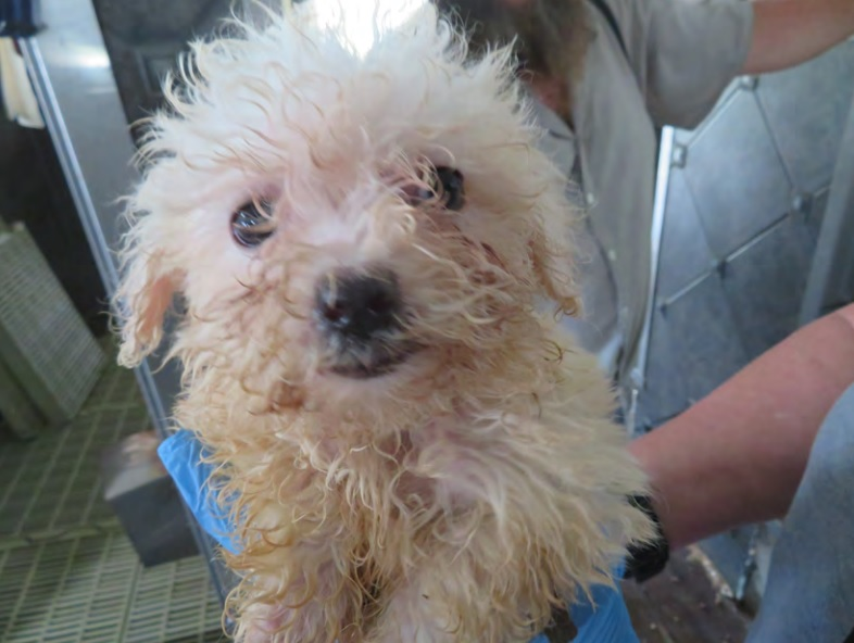 Sheriff: Criminal charges are warranted in puppy mill case