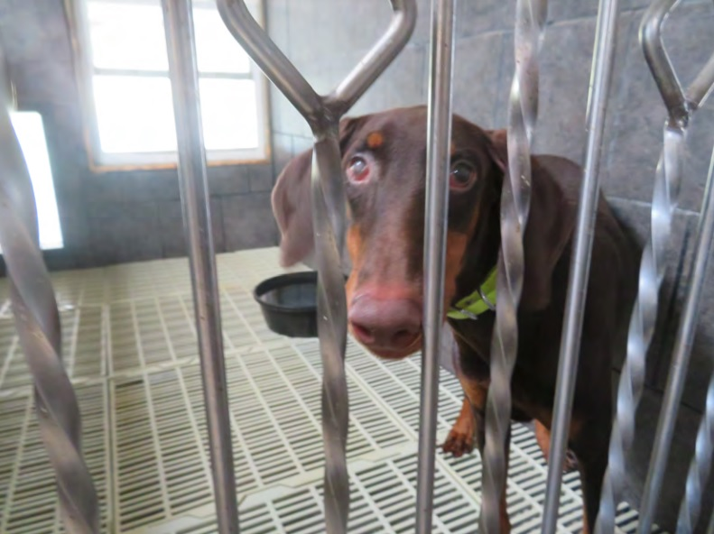 Puppy mill owner tells judge 'it's nobody's fault but my own'